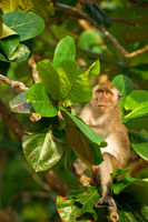 Angry looking monkey on the tropical tree