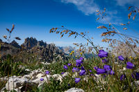 Abstract background of Alpine flowers.