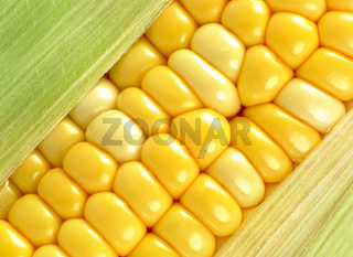 corn close up