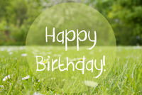 Gras Meadow, Daisy Flowers, Text Happy Birthday