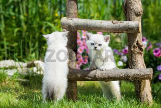 Katzen an der Leiter