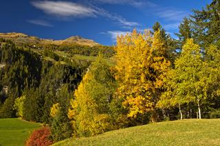 Landschaft mit Laubwald in Herbstfärbung im Engadin, Schweiz