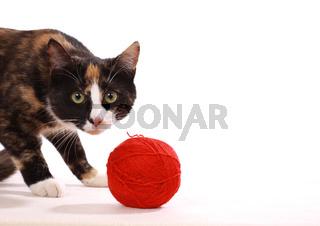 Katze mit Wollknäul