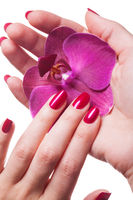 Manicured nails caress dark pink flower pedals