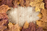 Old autumn leaves frame
