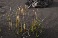 Iceland, grass in the highland