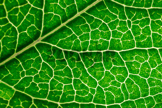 Close up leaf texture