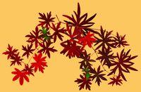 Fall_leaf_figure_gold1