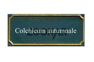 schild Herbstzeitlose,Giftkrokus,Wiesensafran,Colchicum autumnale
