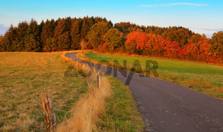 Landscape with road field and forest.