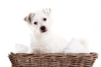 Sweet dog in basket