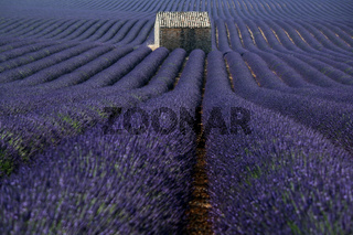 Plateau Valensole, Provence, Frankreich