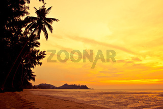 Coconut palm on sand beach in tropic on sunset. Thailand