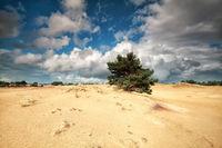 beautiful cloudy sky ove sand dunes