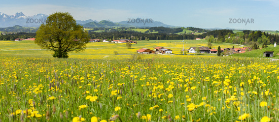 panorama landscape in Bavaria with alps mountains at spring