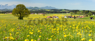 Panorama Landschaft mit Frühlingswiese im Allgäu