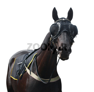 Racehorse with Pacifier Eye Mesh