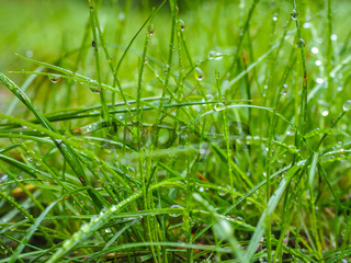 Water droplets on grass from rain at early morning up close