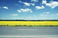 Rape Field Rape Oil