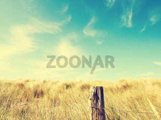 Dune grass with a blue summer sky