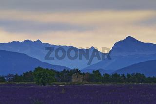 Montagne de Lure, Provence, France