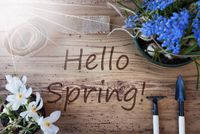 Sunny Flowers, Text Hello Spring