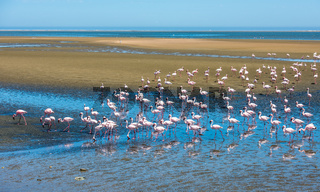Flock of flamingos at Walvis Bay, Namibia