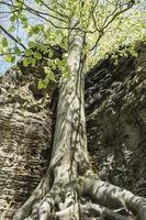 Beech and sandstone rocks, Bohemian Switzerland, Czech Republic