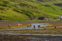 Group od cows