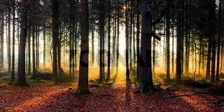Sunrise in a forest near Friedeburg