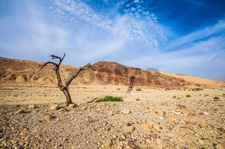 Stone desert near the resort of Eilat