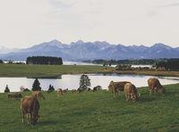 Forggensee near Fuessen/Allgaeu/Bavaria