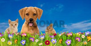 Haustiere in Frühlingswiese