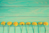 Dandelions on a blue wooden background