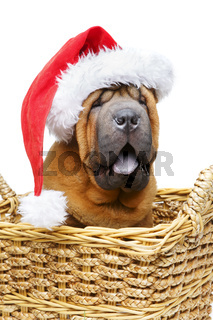 shar pei puppy in christmas hat