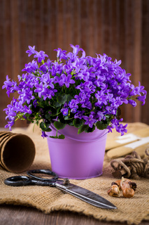 Flowers for planting with garden tools