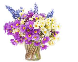 Sprigs Muscari and Primroses flowers in small glass