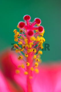Extreme close up of a colourful flower stamen and stigma.