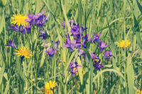 Meadow with purple and yellow wildflowers