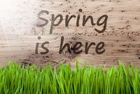 Bright Sunny Wooden Background, Gras, Text Spring Is Here