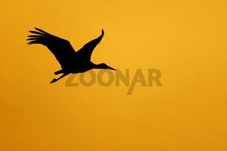 Storch am Abendhimmel