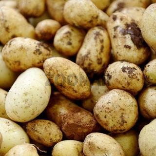Neue Kartoffeln (Solanum tuberosum)