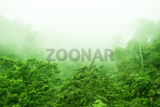 Rainforest in foggy morning