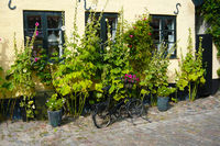 An old black bicycle in a cobbled street with flowers