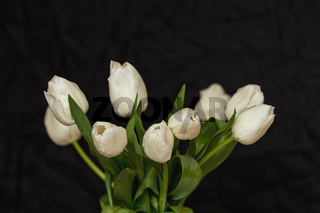 Many white tulips on black surface. Beautiful romantic background.