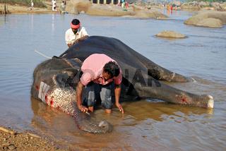 Elefant mit seinem Mahout badet im Tungabhadra Fluss, Hampi, Südindien, Asien