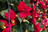 close up of christmas tree with floral decorations