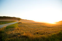 Sunset over a harvested field