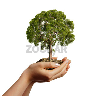Woman's hands holding soil with a tree.