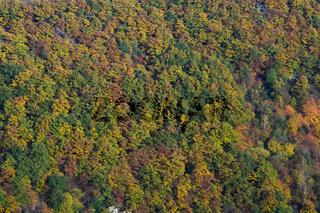 Herbstwald, Rotweinwanderweg, Ahrtal